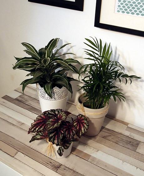 decora con plantas