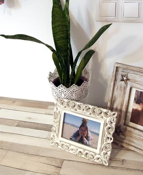 decora tu salón con plantas